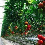 Sürdürülebilir tarımın faydaları
